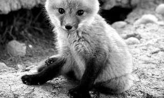 Increíbles Fotos De Las Más Adorables Criaturas