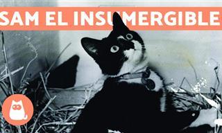 Este Impresionante Gato Logró Sobrevivir a 3 Naufragios