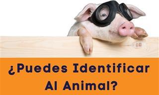 ¿Puedes Identificar El Animal a Través De Una Foto Parcial?