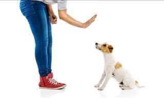 Por Tu Seguridad: Cómo Actuar Ante El Ataque De Un Perro
