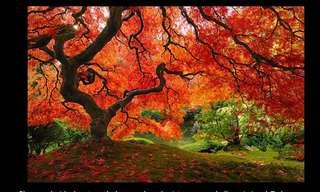 Los Árboles Más Majestuosos Del Mundo