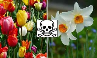 14 Plantas Perjudiciales Para Nuestras Mascotas