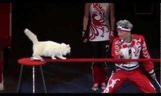 ¡Los Gatos De Circo Rusos Son Increíbles!