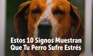¿Tienes Perro? Signos Para Saber Si Está Estresado