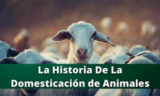 Test: La Historia De La Domesticación Animal