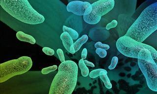 Test De Conocimientos: ¿Qué Tanto Sabes Sobre Los Virus?