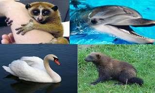 Los 10 Animales Hermosos Y Más Mortales