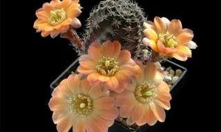 Descubre El Lado Más Bello De Los Cactus...