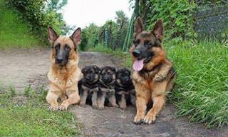 En El Mundo Lo Más Importante Es La Familia