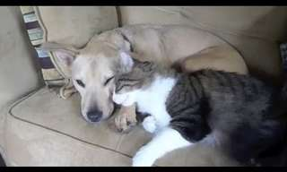 No Todo Es Odio Entre Perros y Gatos...