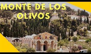 Conoce El Monte De Los Olivos En Israel