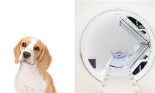 Perros Que Detectan Enfermedades y Cuáles Pueden Detectar