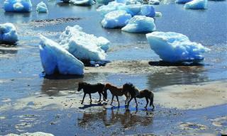 Un Regalo Para La Vista: Paisaje De Kujataa, Groenlandia