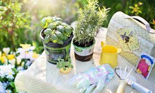 Errores Que Se Cometen En Jardinería y Que Debes Evitar