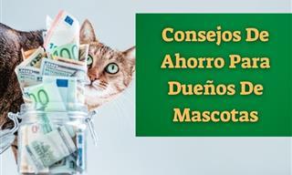 Consejos Para Ahorrar Dinero En El Cuidado De Las Mascotas