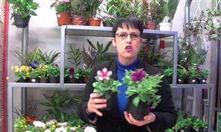 Flores y Plantas Para Tu Balcón Ideales En Primavera