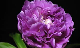 Nada Más Hermoso Que Ver a Las Flores Florecer