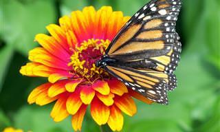 45 Hermosas y Sabias Frases  Sobre la Naturaleza