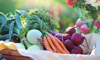 Mantén Tu Comida Fresca Por Más Tiempo Con Estos Tips
