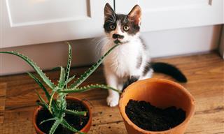 9 Plantas De Interior Que Son Tóxicas Para Humanos y Mascotas