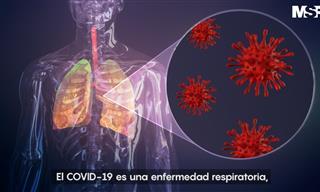Así Ataca El Coronavirus Al Cuerpo Humano