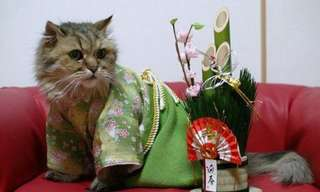 ¡Gatos Vestidos Con Kimonos a Medida!