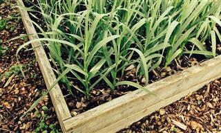 14 Prácticos Tips Para Cultivar Vegetales En Tu Propia Casa