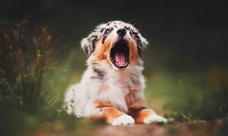25 De Las Mejores Fotografías De Perros De Kristýna Kvapilová