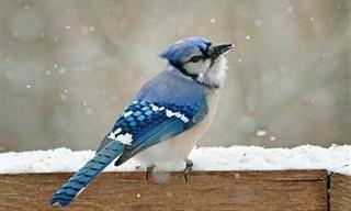 7 Hermosas Aves De Norteamérica