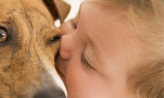 Qué Graciosos y Tiernos Estos Perros Haciendo De Papás