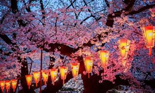 La Belleza De Los Cerezos En Flor En 14 Imágenes