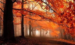 La Magia De Los Bosques Europeos En Otoño