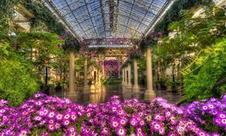 ¡El Paraíso De Los Amantes De La Botánica y La Jardinería!