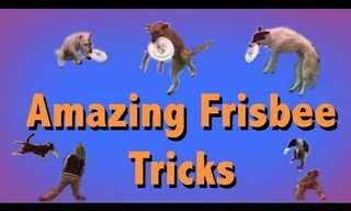 Los Incréibles Trucos De Un Perro Con Su Frisbee