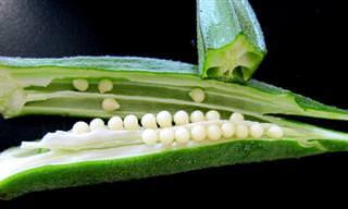 Okra: Un Vegetal Poco Conocido Con Numerosas Propiedades