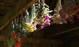 Aprende a Secar Flores En Pocos Pasos