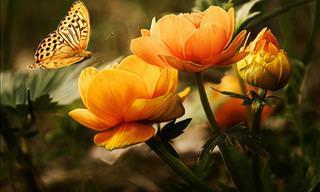 15 Flores Aromáticas Ideales Para Plantarlas En Tu Jardín