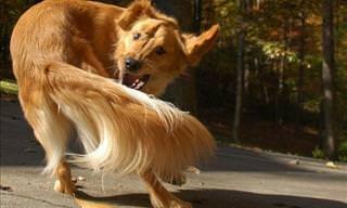 Curiosidades Que No Sabías Sobre Los Perros