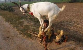 Cosas Que Tan Solo Puedes Ver En La India