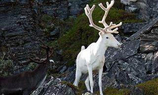 Dale Un Vistazo a 15 De Los Animales Albinos Más Hermosos