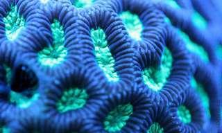 La Macro-Belleza De Los Arrecifes De Coral