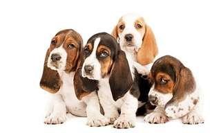 Cachorros de Distintas Razas con 6 Semanas