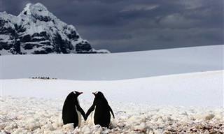 Los Pingüinos En Todo Su Esplendor