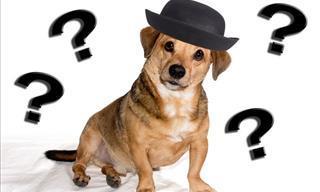 Test: ¿Puedes Reconocer Al Animal De La Imagen?