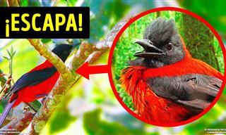 El Ataque De Estos Pájaros Podría Ser Mortal Para Una Persona