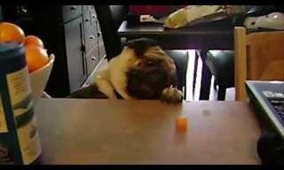 ¡No Podrás Creer Lo Que Hacen Estas Mascotas En La Cocina!