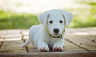 Estos Adorables Cachorritos Quieren Alegrarte La Jornada