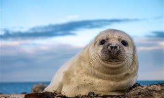10 Especies Marinas Que Son Conocidas Por Ser Amigables Con Los Humanos