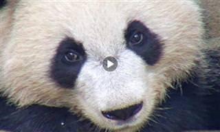 15 Fascinantes Webcams Para Ver En Este Momento