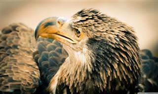 15 Hermosas Fotos e Interesantes Datos Sobre Las Águilas